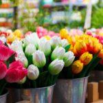 Si vous êtes à la recherches de tulipes, bulbes, fleurs et souvenirs, le marché aux fleurs est l'endroit idéal pour vous en procurer. Il ya de nombreux fleuristes sur des péniches et les prix sont assez corrects. (7)