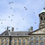 La place du Dam avec son Palais Royal est située au coeur du centre ville. Le Palais Royal est ouvert aux touristes. (3)